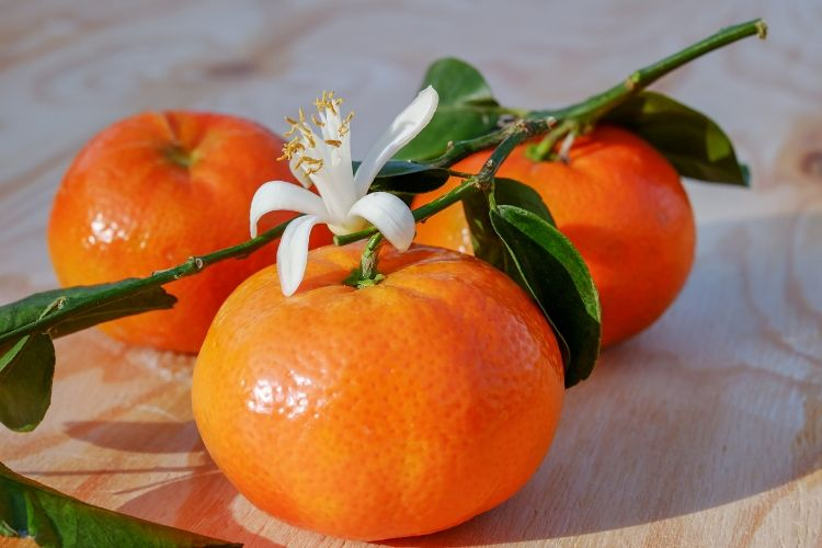 calories in clementines